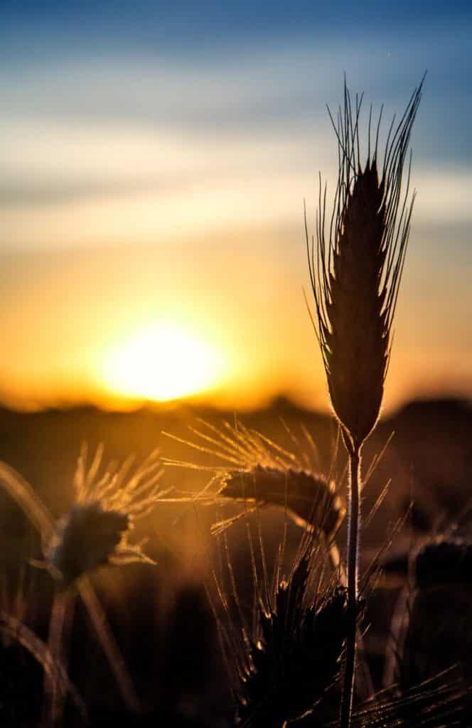 Sonnenaufgang - Groß Lindow