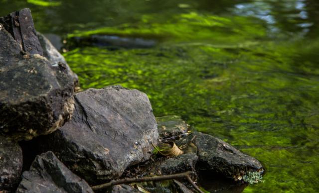 grünes Wasser - Schlaubetal