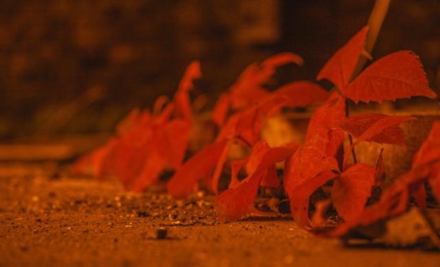 Herbst - Eisenhüttenstadt
