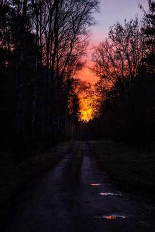 Wald - Groß Lindow